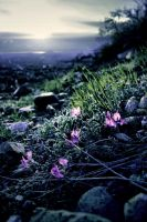 Flower in the Wasatch Twilight by Halcyon1990