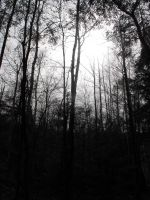 Into the shadow of the woods by Readmeabook21