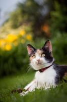 Cat in the garden by Lareen