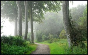 Sea-fog at the beech-trees by jchanders