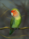 Lovebird by Noctualis