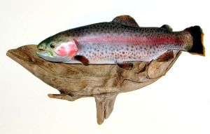 Rainbow Trout - Taxidermy by Zhon