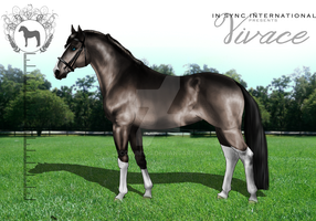 ISI Vivace by Decorum100