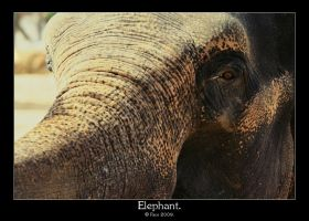 Elephant. by FSGPhotography