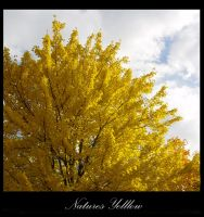 Yellow Nature by brilliance