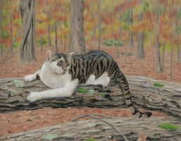 Rocky in the Fall Woods by angelahedderick