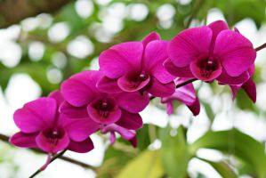 Purple Orchids 4 by a6-k