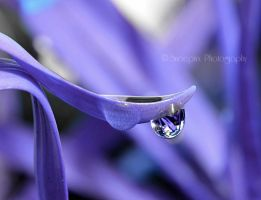 Purple Rain by Snoepixx-Photography