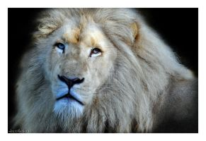 white lion king by photoflacky