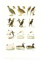 Antique birds print 10 by OMEGA86