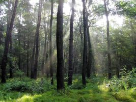 Sunny Forest 111435 by StockProject1