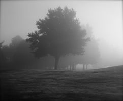 Morning mist by Choquet