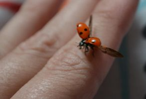 Ladybird about to fly by Bexiieeee