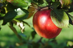 Apple by LucieG-Stock