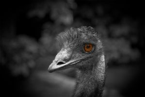 Emu by cluster5020