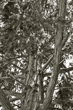 Tree Branches by LeftyRodriguez