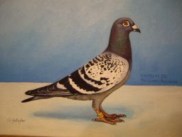 pigeon by lot222