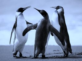 Penguins by mainihc