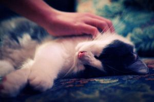 happiness is an alive cat by sprinkling-of-color