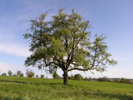 Tree in green Nature by archaeopteryx-stocks