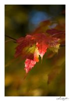 Lighted Red by lynsea