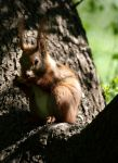 squirrel by dVane