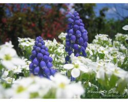 Moments of Spring 2 by love1008