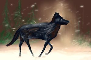 Black Wolf by philippeL