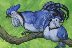 Blue Jayfowl by ursulav