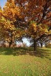 Autumn Stock 10 by Malleni-Stock