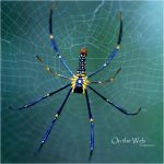 On the Web by ninazdesign