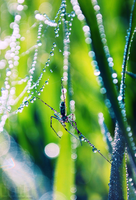 spring spider by dev1n