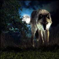 The Wolf by 1989juni