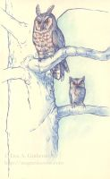 Two Owls by teriathanin