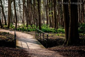 Enlightened path by TLO-Photography