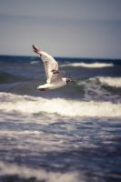 seagull 2 by Pazdan