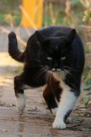 Cat Stock 51 by Malleni-Stock