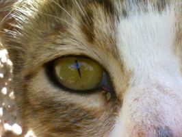 Cat Eye2 by Daisydog8