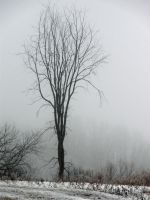 Lone Tree on a Foggy Day by meggyweggy