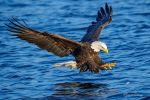 .:Eagle Fishing I:. by RHCheng