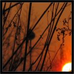 Branches Under Fire Sky 05 by Maylar