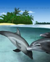 Dolphin Paradise by meihua