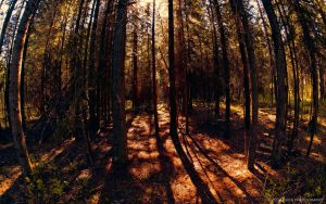 Into the Forest by AgilePhotography