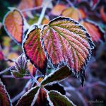 Frosty colours by irgendeine
