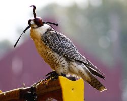 Falconry 2 by S-H-Photography