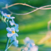 forget by Megson