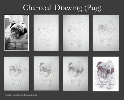 Charcoal Drawing Tutorial (Pug) by YourFavoriteRussian
