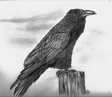 the Raven by winstonscreator