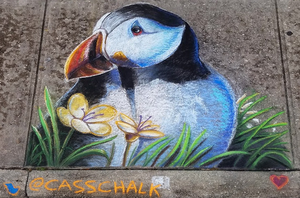 North Atlantic Puffin Chalk Art by charfade