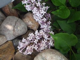 More lilacs and rocks by GodessFae